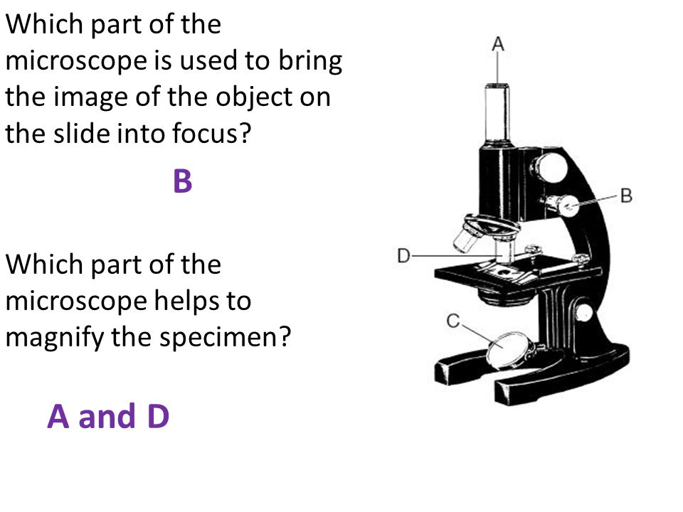 Which part of the microscope is used to bring the image of the object on the slide into focus Which part of the microscope helps to magnify the specimen