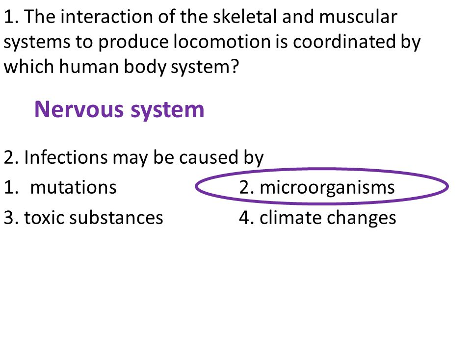 1. The interaction of the skeletal and muscular systems to produce locomotion is coordinated by which human body system