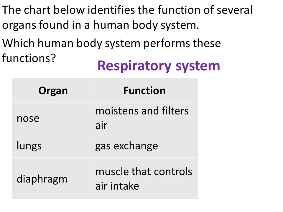 The chart below identifies the function of several organs found in a human body system. Which human body system performs these functions