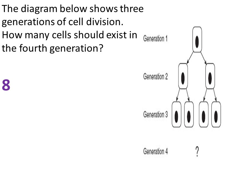 The diagram below shows three generations of cell division