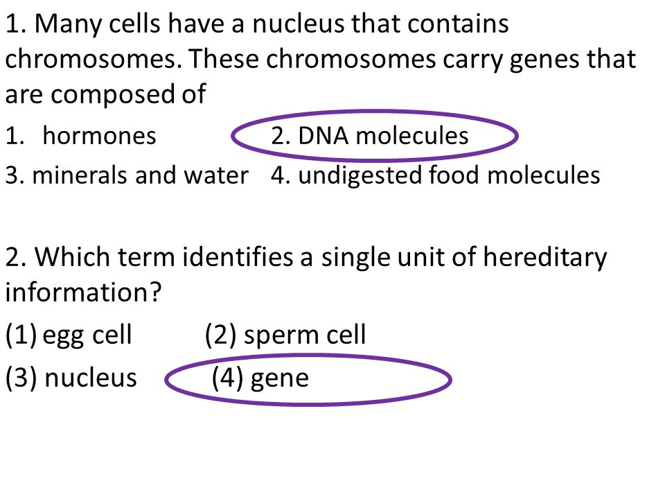 2. Which term identifies a single unit of hereditary information