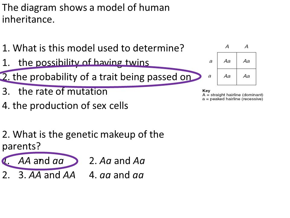 The diagram shows a model of human inheritance.