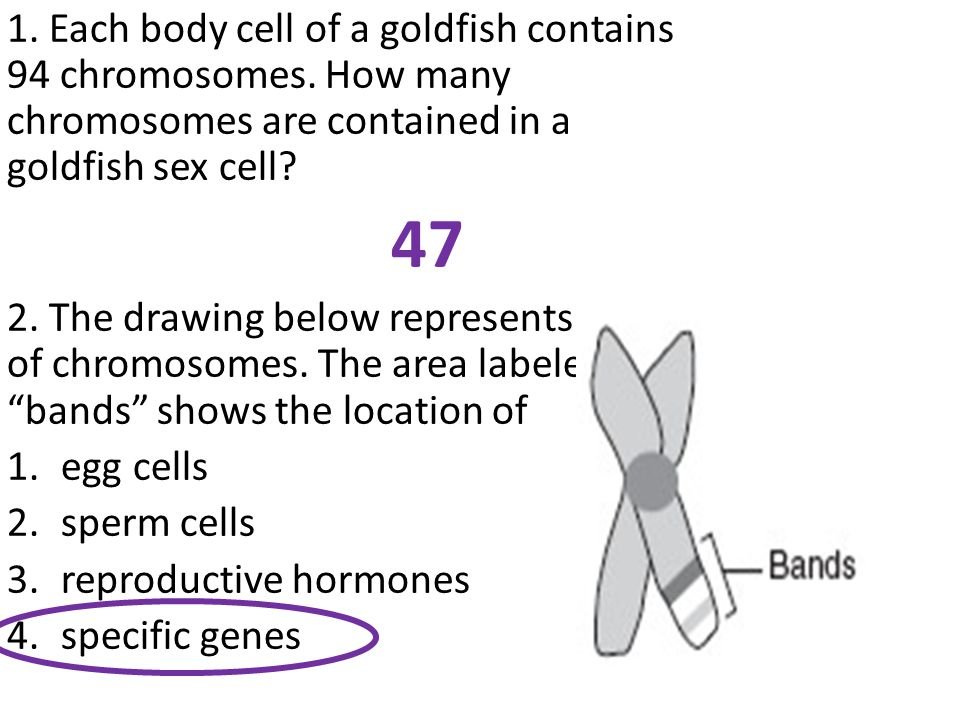 1. Each body cell of a goldfish contains 94 chromosomes