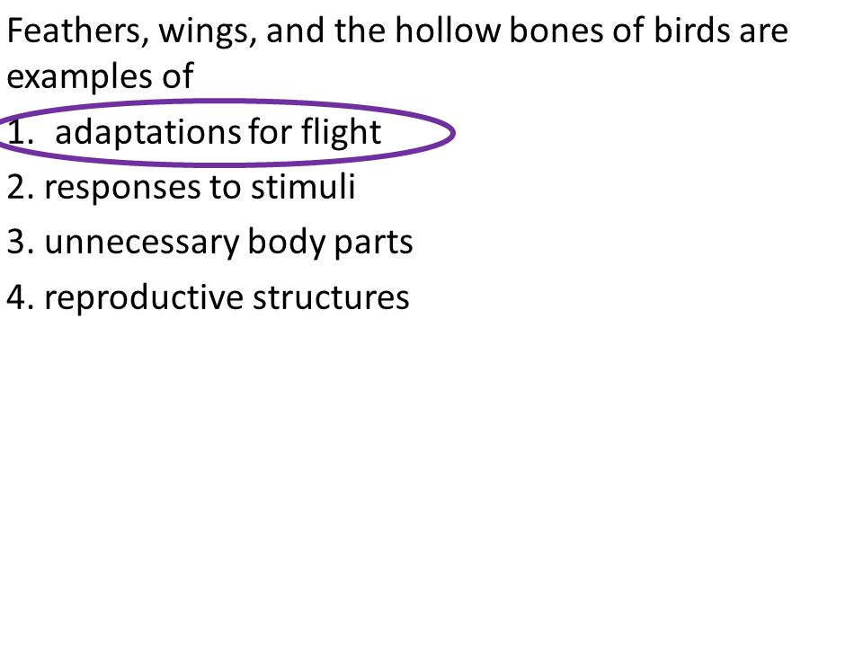 Feathers, wings, and the hollow bones of birds are examples of