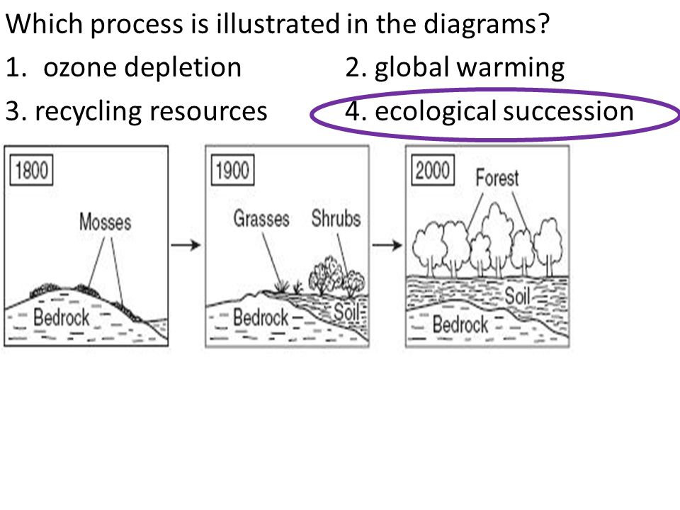 Which process is illustrated in the diagrams