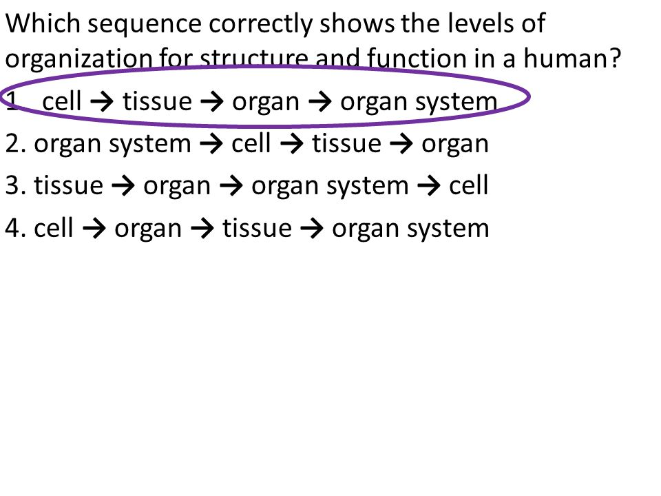 Which sequence correctly shows the levels of organization for structure and function in a human