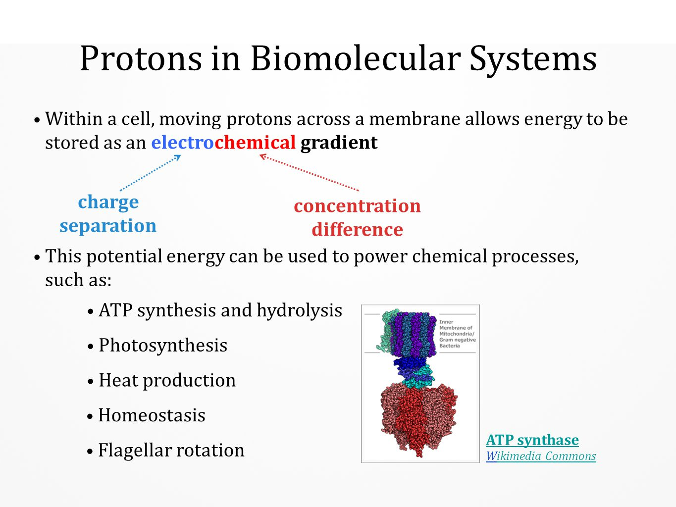 Protons in Biomolecular Systems