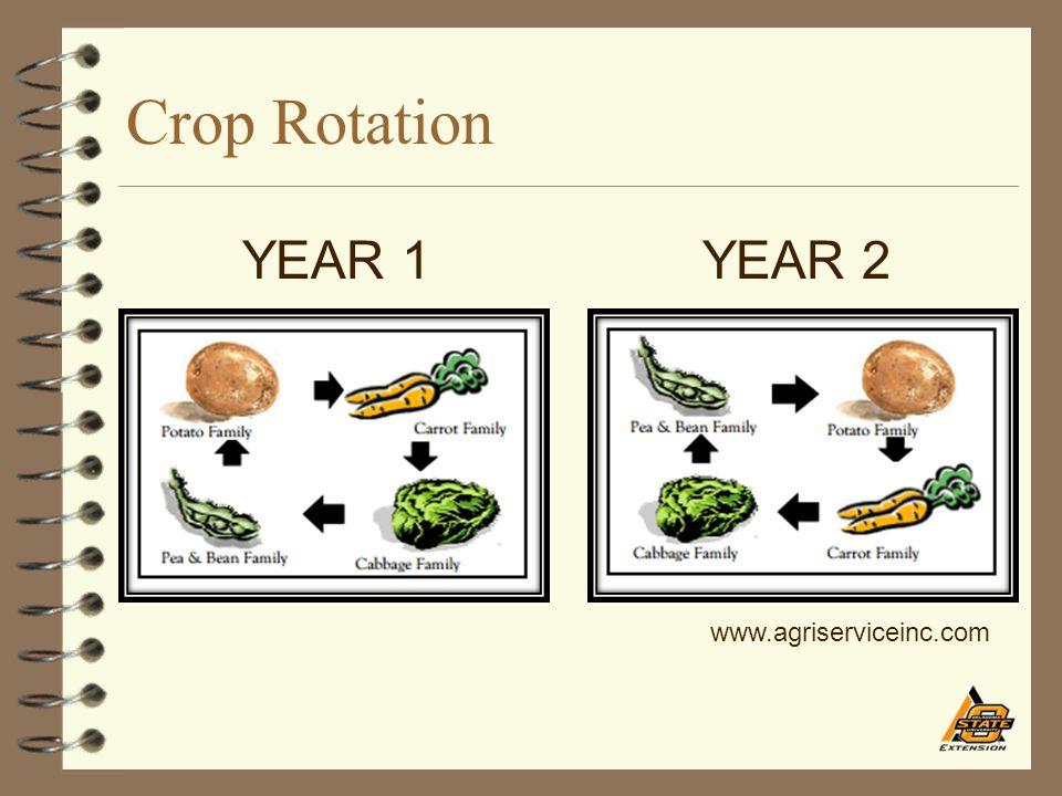 Crop Rotation YEAR 1 YEAR 2 www.agriserviceinc.com