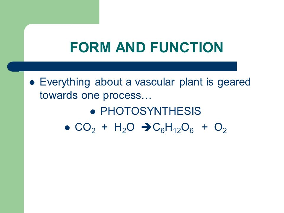 FORM AND FUNCTION Everything about a vascular plant is geared towards one process… PHOTOSYNTHESIS.