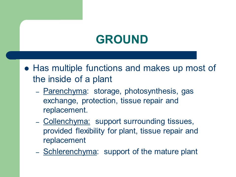 GROUND Has multiple functions and makes up most of the inside of a plant.