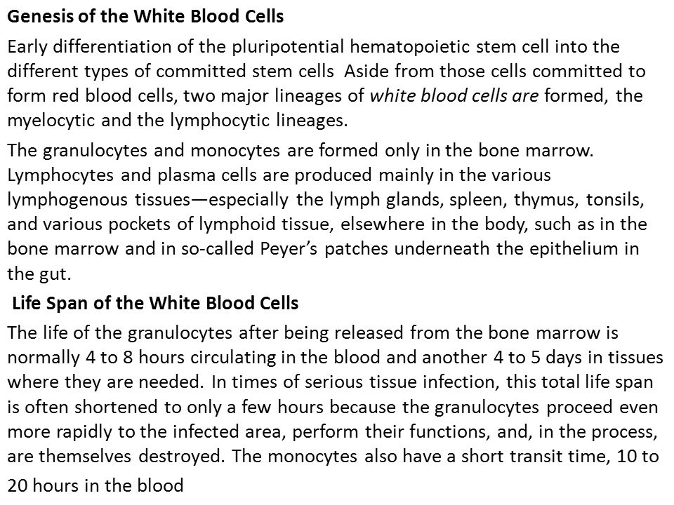 Genesis of the White Blood Cells