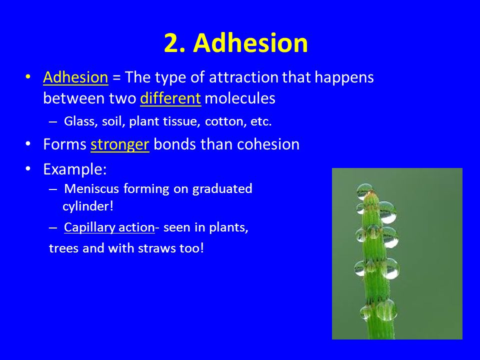2. Adhesion Adhesion = The type of attraction that happens between two different molecules. Glass, soil, plant tissue, cotton, etc.