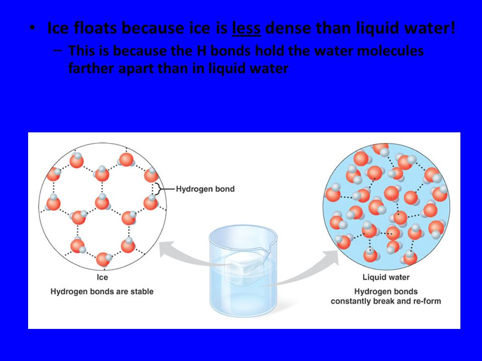 Ice floats because ice is less dense than liquid water!