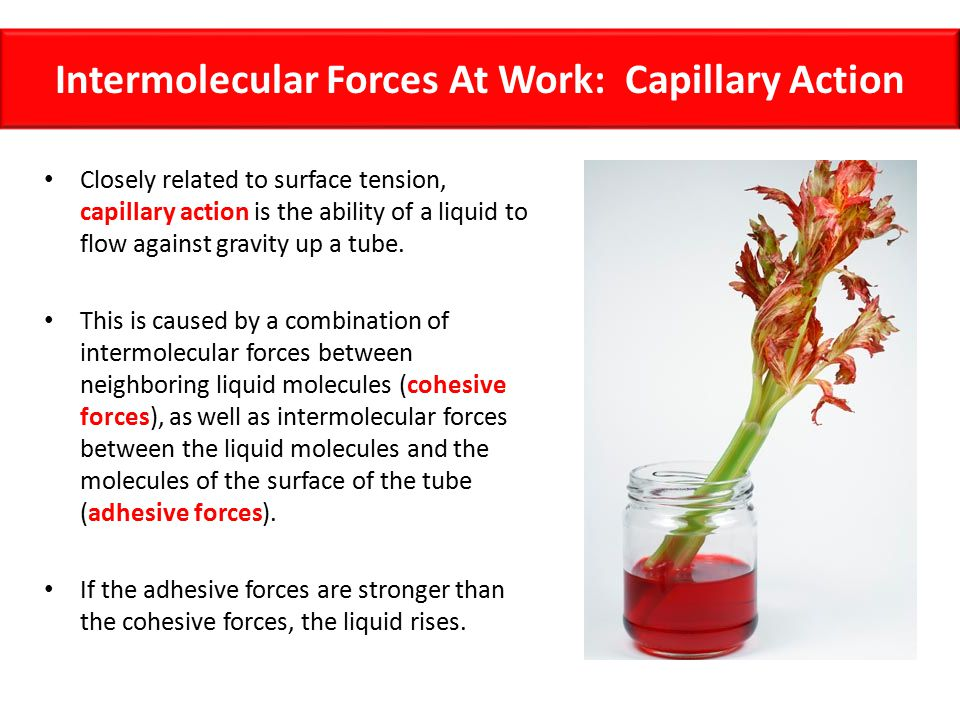 Intermolecular Forces At Work: Capillary Action