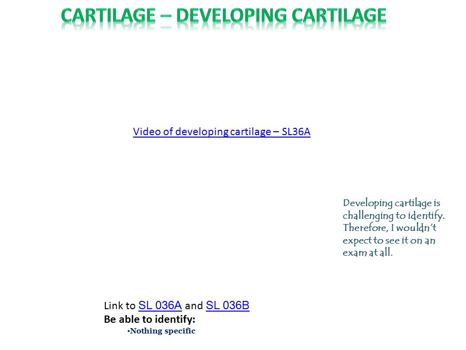 Cartilage – DEVELOPING cartilage