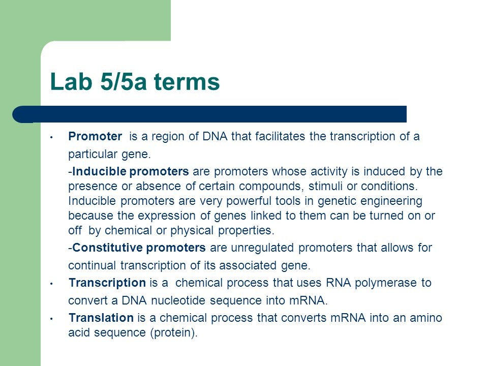 Lab 5/5a terms Promoter is a region of DNA that facilitates the transcription of a. particular gene.