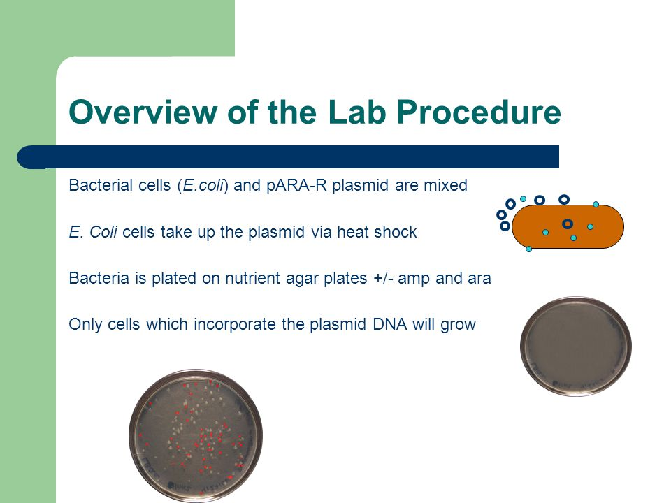 Overview of the Lab Procedure