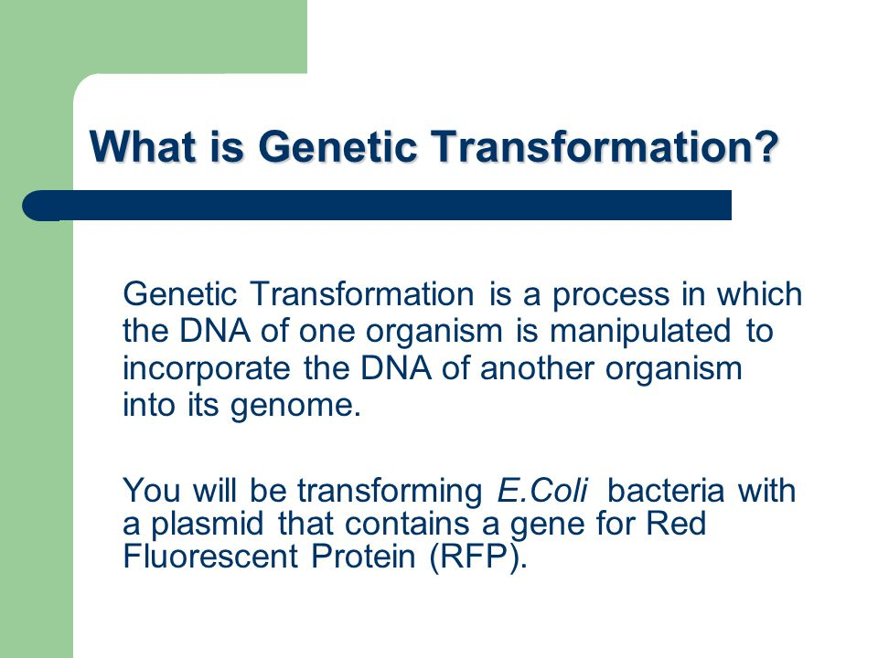 What is Genetic Transformation
