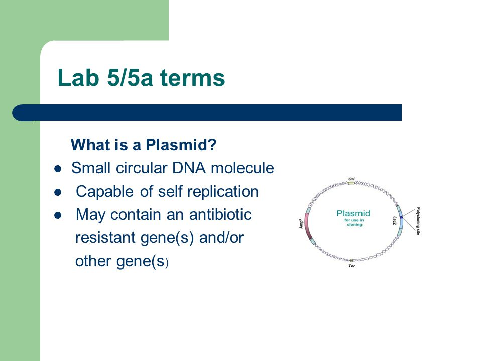 Lab 5/5a terms What is a Plasmid Small circular DNA molecule