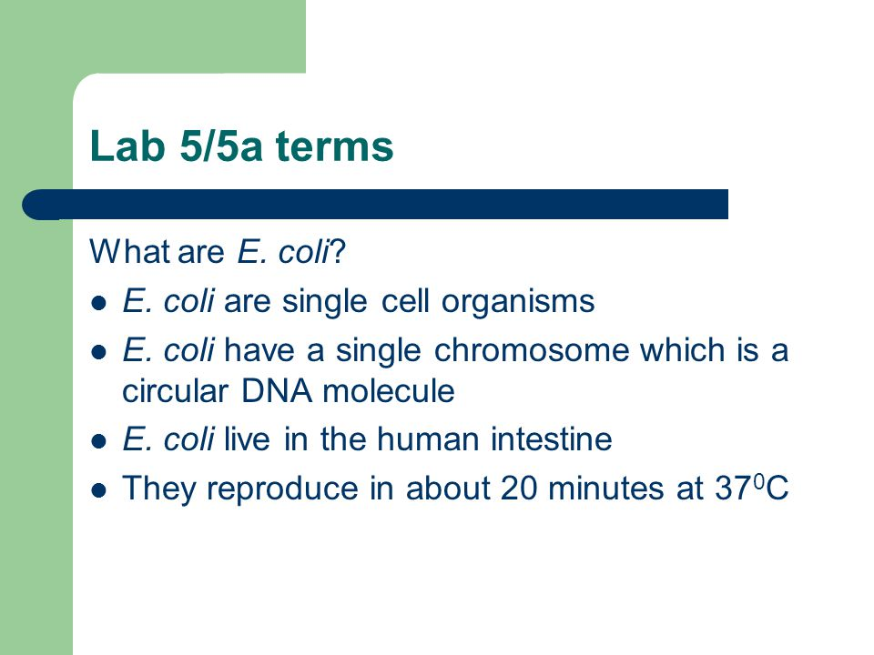 Lab 5/5a terms What are E. coli E. coli are single cell organisms