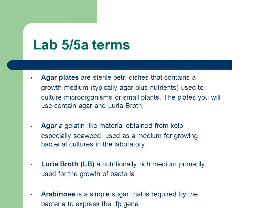 Lab 5/5a terms Agar plates are sterile petri dishes that contains a