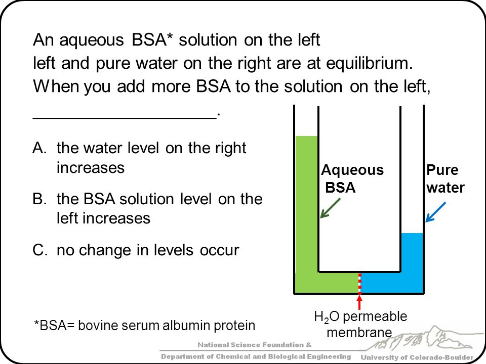 An aqueous BSA* solution on the left