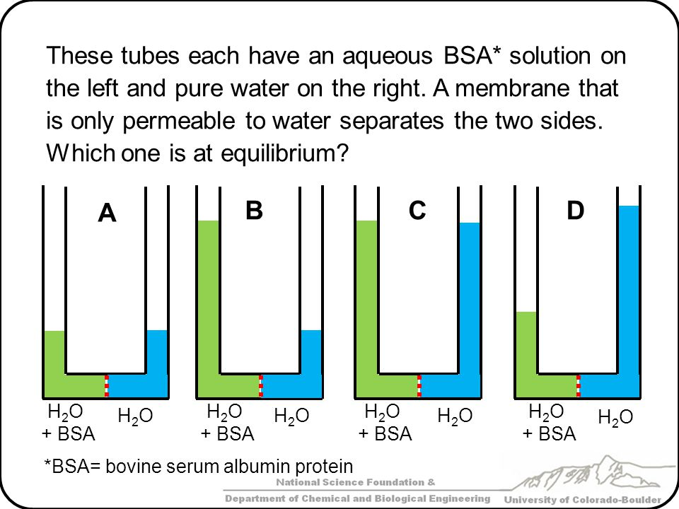 A B C D These tubes each have an aqueous BSA* solution on