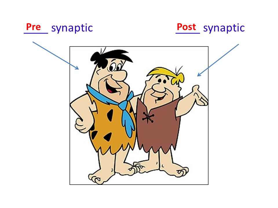 ____ synaptic Pre ____ synaptic Post