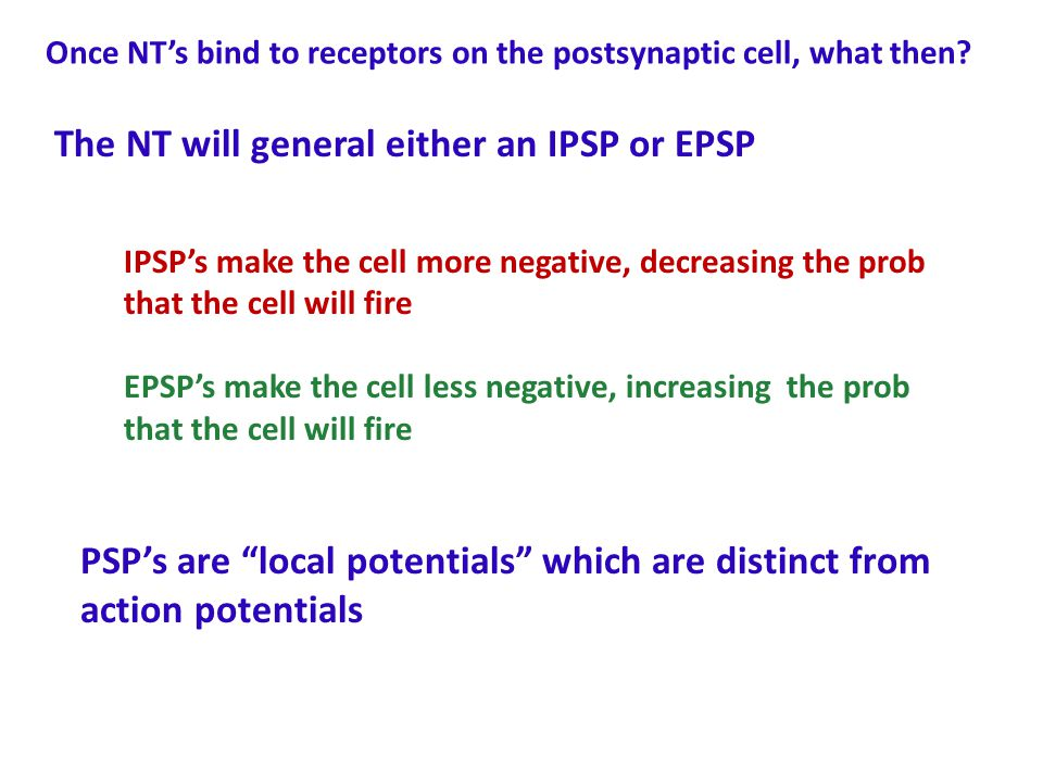 The NT will general either an IPSP or EPSP