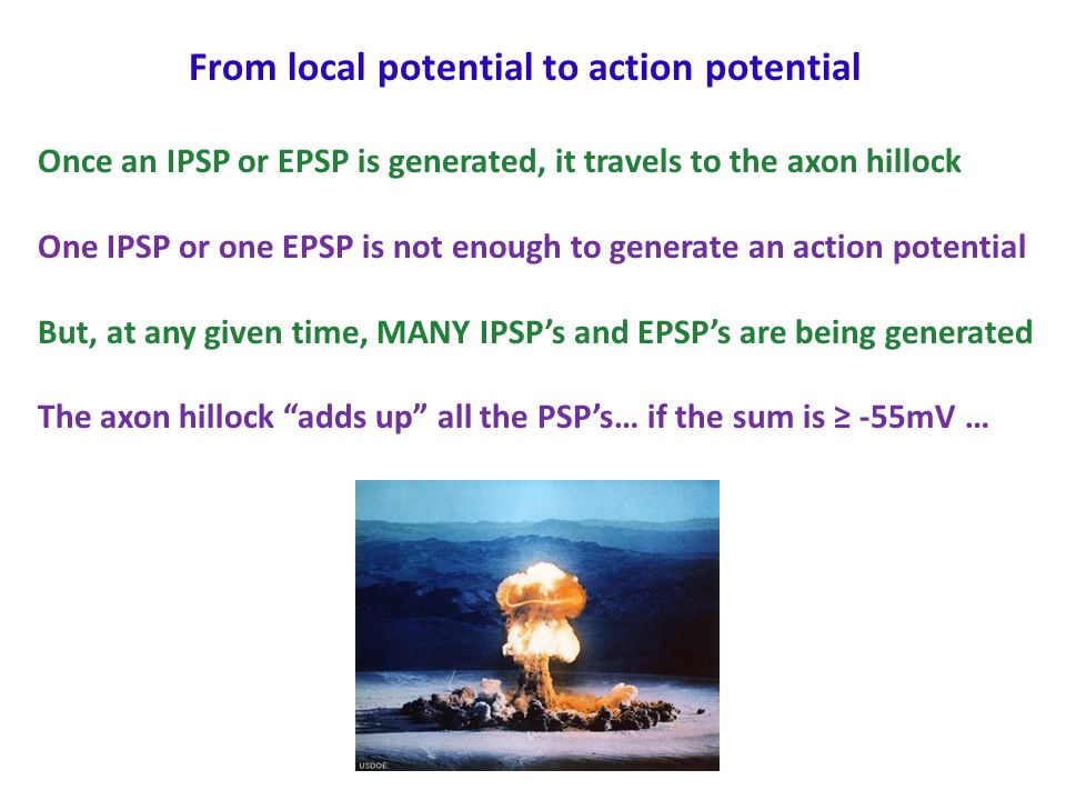 From local potential to action potential