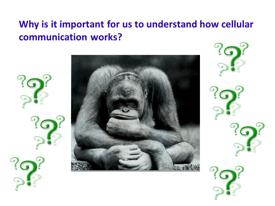 Why is it important for us to understand how cellular