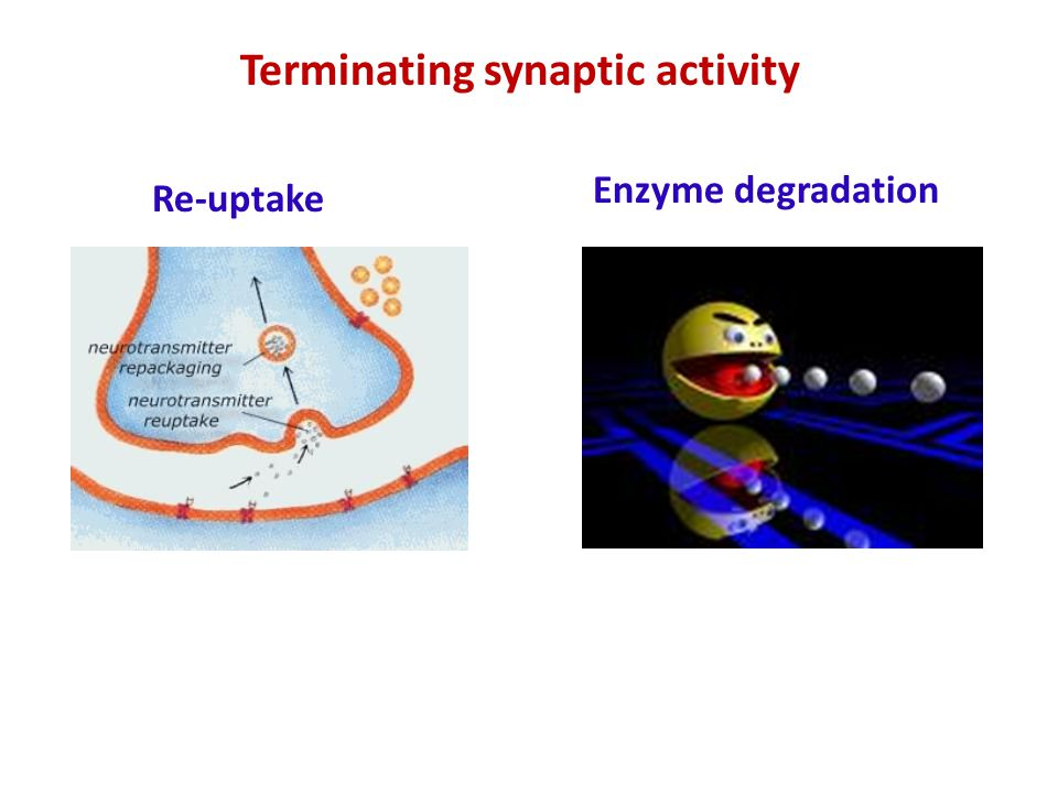 Terminating synaptic activity