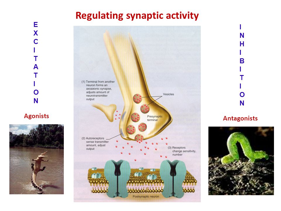 Regulating synaptic activity