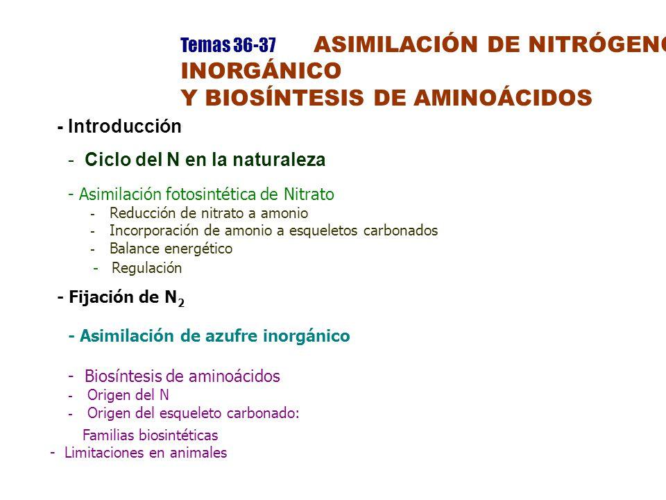 Y BIOSÍNTESIS DE AMINOÁCIDOS