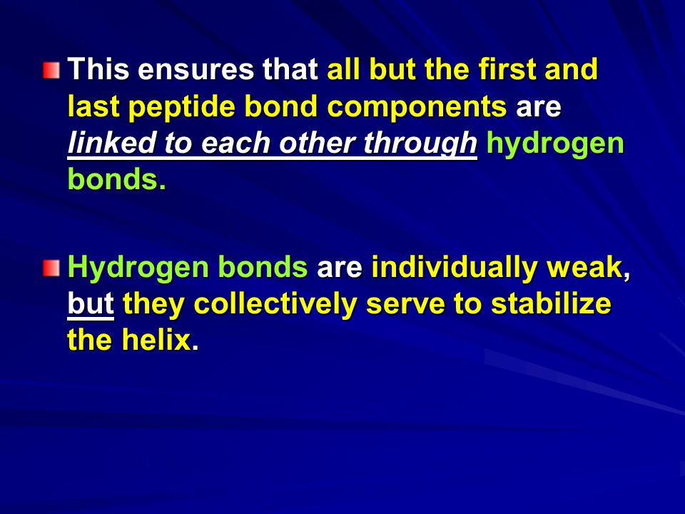 This ensures that all but the first and last peptide bond components are linked to each other through hydrogen bonds.