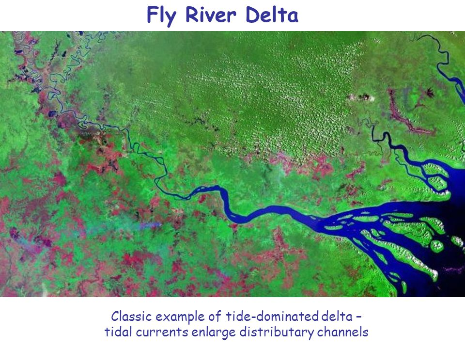 Fly River Delta Classic example of tide-dominated delta – tidal currents enlarge distributary channels.