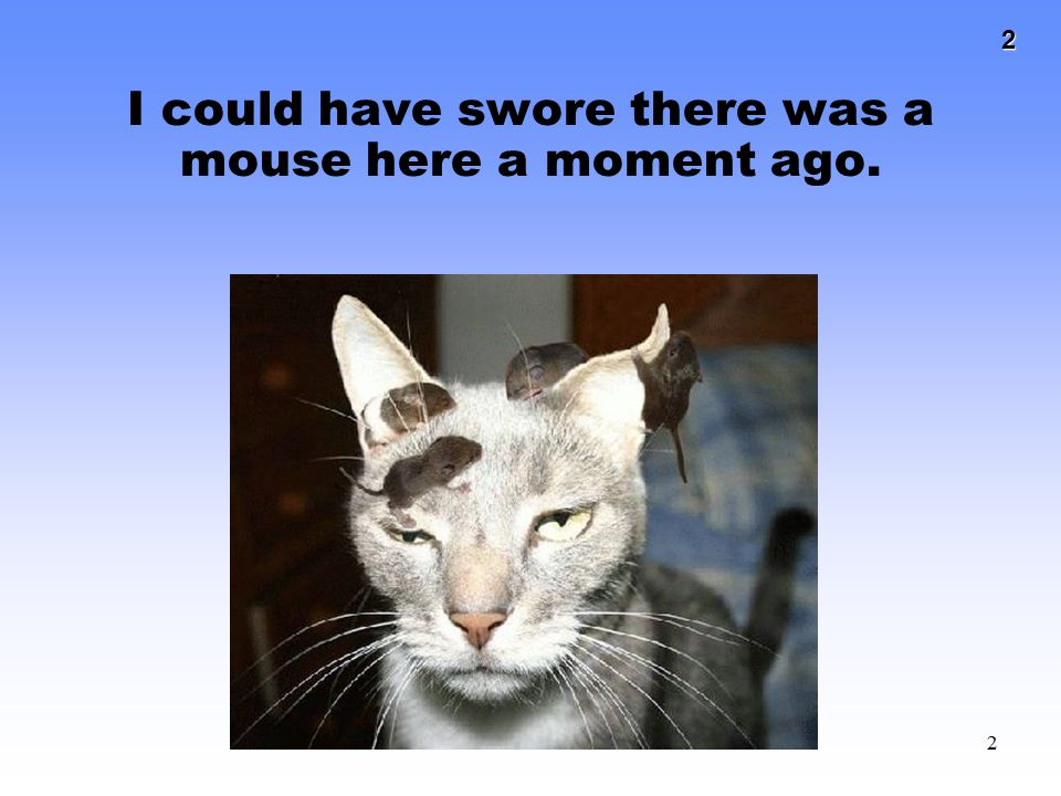 I could have swore there was a mouse here a moment ago.
