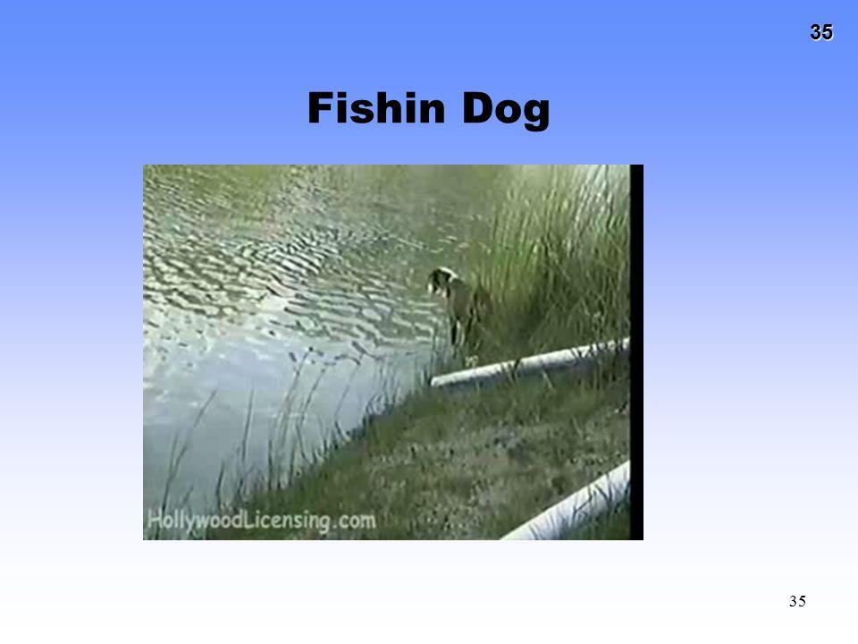Fishin Dog