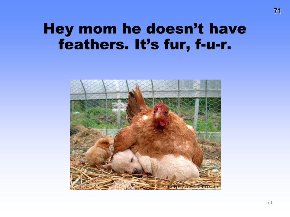 Hey mom he doesn't have feathers. It's fur, f-u-r.