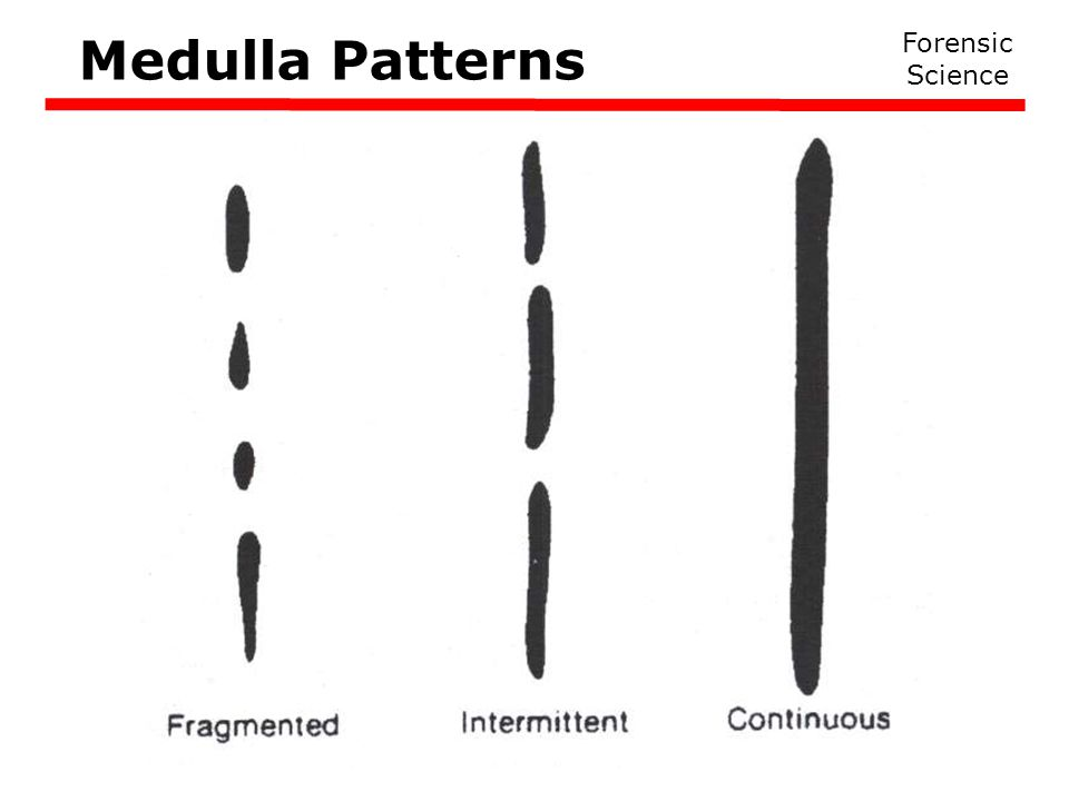 Medulla Patterns Forensic Science