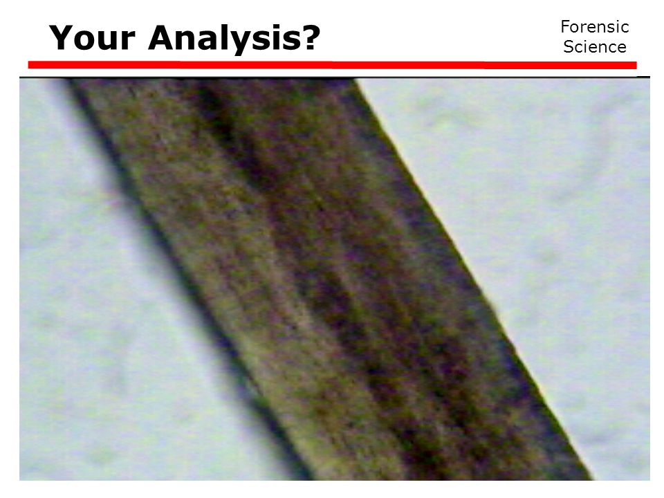 Your Analysis Forensic Science