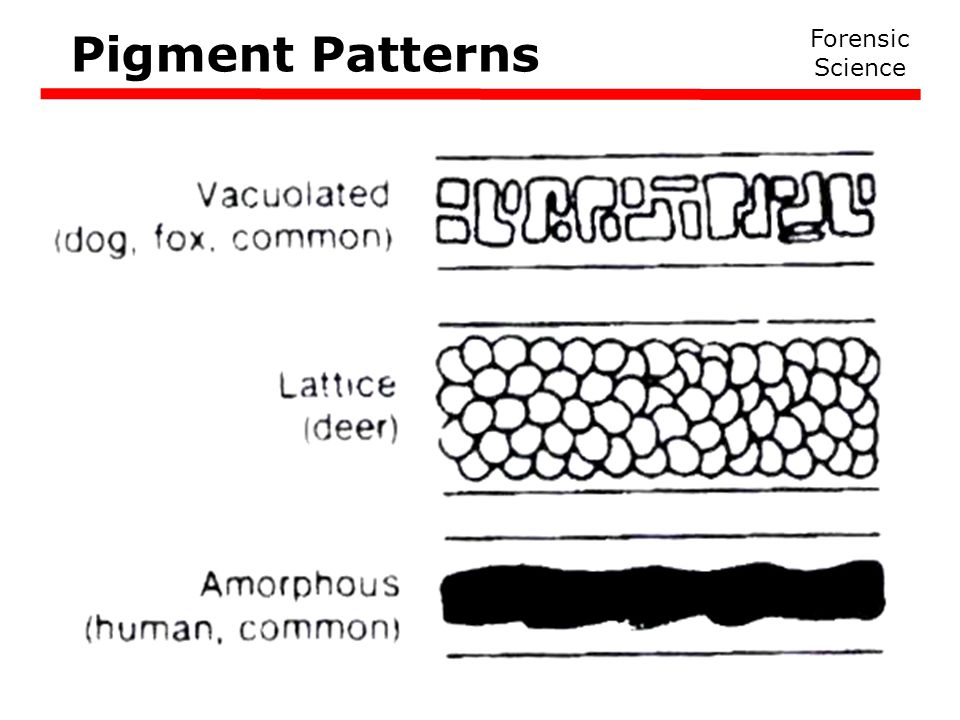 Pigment Patterns Forensic Science