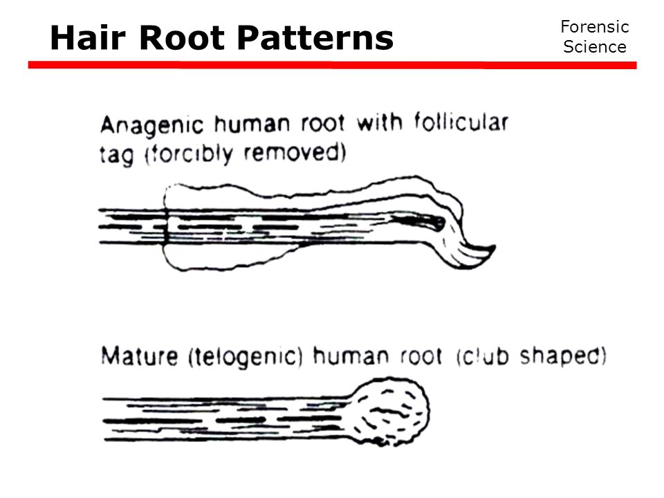 Hair Root Patterns Forensic Science