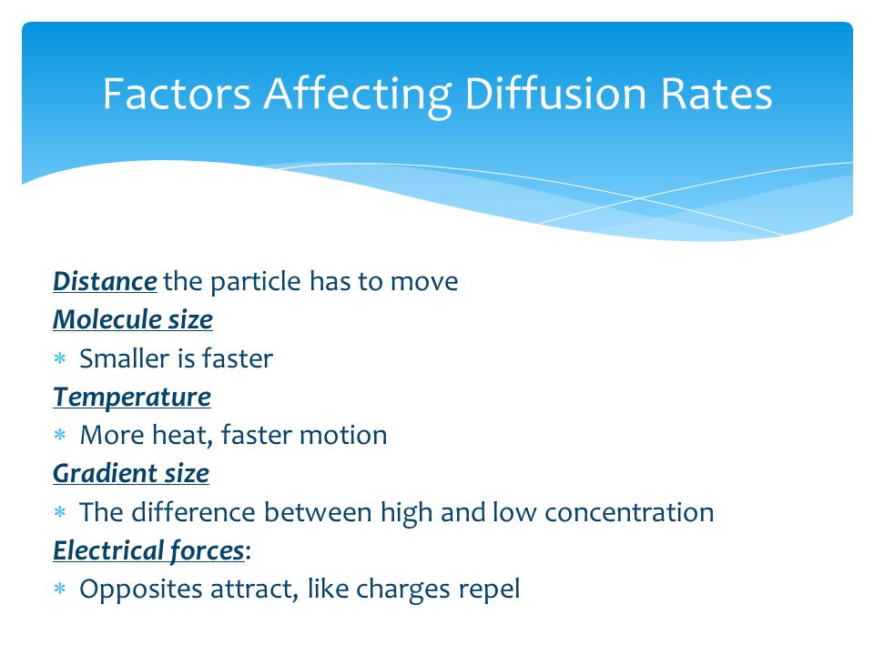 relationship between rate of diffusion and cell size
