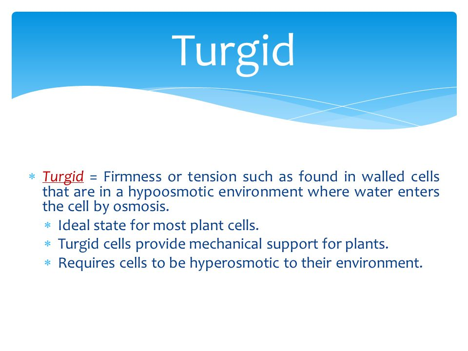 Turgid Turgid = Firmness or tension such as found in walled cells that are in a hypoosmotic environment where water enters the cell by osmosis.