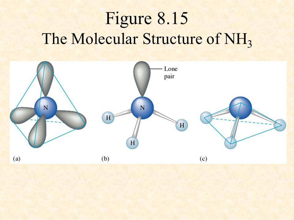 Figure 8.15 The Molecular Structure of NH3