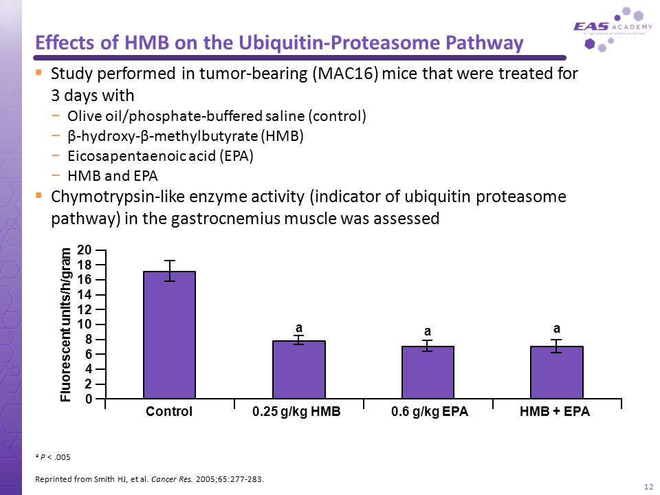 Effects of HMB on the Ubiquitin-Proteasome Pathway