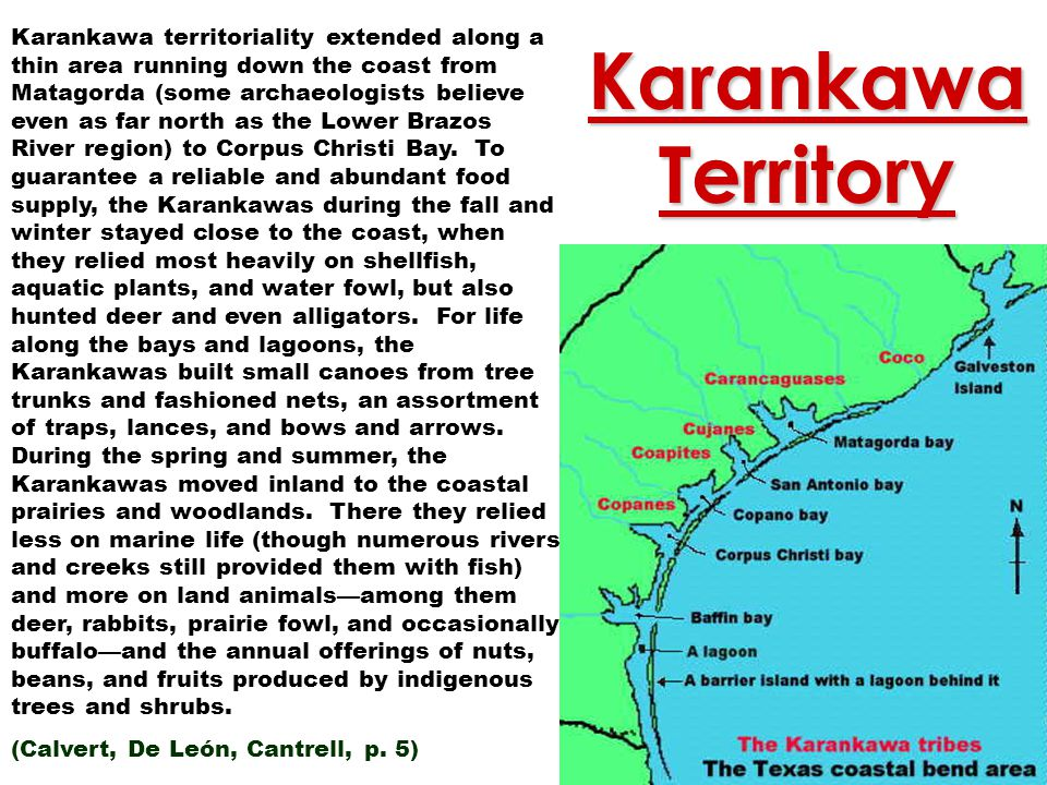 Karankawa territoriality extended along a thin area running down the coast from Matagorda (some archaeologists believe even as far north as the Lower Brazos River region) to Corpus Christi Bay. To guarantee a reliable and abundant food supply, the Karankawas during the fall and winter stayed close to the coast, when they relied most heavily on shellfish, aquatic plants, and water fowl, but also hunted deer and even alligators. For life along the bays and lagoons, the Karankawas built small canoes from tree trunks and fashioned nets, an assortment of traps, lances, and bows and arrows. During the spring and summer, the Karankawas moved inland to the coastal prairies and woodlands. There they relied less on marine life (though numerous rivers and creeks still provided them with fish) and more on land animals—among them deer, rabbits, prairie fowl, and occasionally buffalo—and the annual offerings of nuts, beans, and fruits produced by indigenous trees and shrubs.