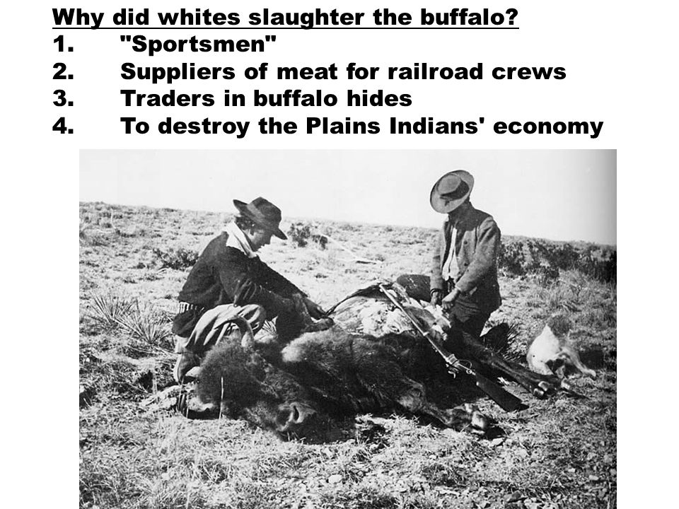 Why did whites slaughter the buffalo