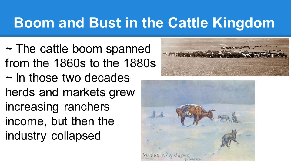 Boom and Bust in the Cattle Kingdom